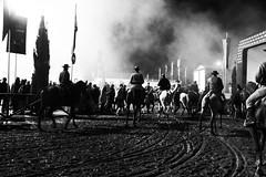 J cheira a castanhas . (manelcarvalho94) Tags: horse portugal pb feira cavalo boas quentes goleg castanhas
