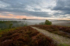 Rockford Common (chrisbutton68) Tags: mist horizontal sunrise landscapes nationalpark track outdoor path heather scenic hampshire erica ling newforest rockford rockfordcommon