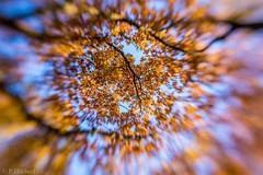 "Am Felix mit dem Lensbaby • <a style=""font-size:0.8em;"" href=""http://www.flickr.com/photos/58574596@N06/22868224455/"" target=""_blank"">View on Flickr</a>"