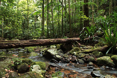 Nightcap National Park (Alan McIntosh Photography) Tags: park nature creek rainforest stream national nightcap