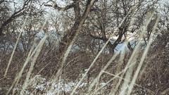 Winter_29 (losing.today) Tags: nature oregon outdoors pacificnorthwest portland pdx portlandor portlandoregon cold coldseason winter trees