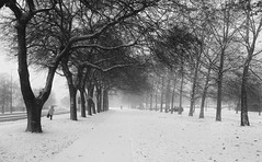 Misty snow (max tuguese) Tags: misty snow winter maxtuguese canon black white blanc noire bianco nero schwarz weis blackwhite bw tree alley cold outdoor walking digital