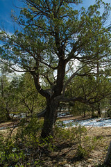 IMG_6895 (dvdstvns) Tags: arizona geodes payson