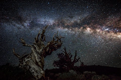 The California Milky Way in the White Mountains! Long Exposure Astro Photography Milkyway Ancient Bristlecone Pine Forest Dr. Elliot McGucken Fine Art Photography (45SURF Hero's Odyssey Mythology Landscapes & Godde) Tags: the california milky way white mountains long exposure astro photography milkyway ancient bristlecone pine forest dr elliot mcgucken fine art sony a7rii a7r landscape night astronomy galaxy dark tree light painting