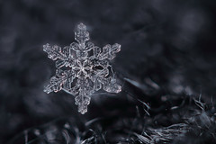 Snowflake n° 3 - 2017 (Rogg4n) Tags: macro realmacro snow snowflake flocondeneige white extensiontubes kenko canoneos100d efs60mmf28macrousm winter hiver bokeh nature symetry pattern crystal chauxdefonds switzerland ice cold wonderland wool scarf closeup season quiet black jewel dendrite purple shootingstar star 2017