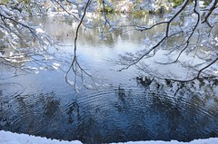 snowy day #2 (snowshoe hare*) Tags: dsc0091 snow pond temple ryoanjitemple kyoto winter reflection trees 龍安寺 鏡容池 雪