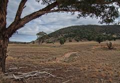 Comming into winter. (dicktay2000) Tags: murringogap ©richardtaylor 40d australia nsw tokina1224mm murringo newsouthwales 20130521img5348