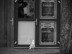 © Inge Hoogendoorn (ingehoogendoorn) Tags: gull gulls seagulls seagull meeuw meeuwen haagsemeeuw denhaag buitenhof thehague viskraam fishshop begging beggar youneverknow expectation waiting waitinginline feedingthebirds birdfeeding streetphotography straatfotografie streetscene