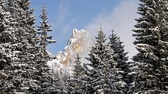 Paneveggio forest and Cimon della Pala (m. 3184) (ab.130722jvkz) Tags: italy trentino alps easternalps dolomites palagroup mountains winter reservesandnationalparks
