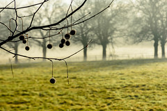 Hanging On (neil955) Tags: christshospital nikond7200 nikon1685 westsussex landscape trees fields