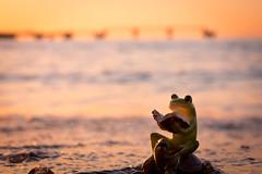 Tateyama city / Canon EOS60D:Canon EF-S60mm F2.8 Macro USM (telenity) Tags: japan tateyama eos60d canon coast cute sunsets ocean 日本 館山 夕暮れ 夕焼け 海 海岸 北条 可愛い シュール
