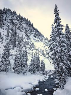 Forest Walk (Lech).