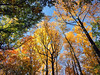 FullSizeRender (45) (sswartz) Tags: michigan fall autumn nature autumnleaves leaves leaf trees forest woods