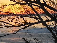 A January Sunset/ Le soleil se couche (anng48) Tags: sunst coucherdesoleil villelasalle montreal quebec qc canada