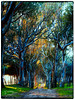 Eucalyptus road (Quirós Fotografía) Tags: quirósfotografía forest trees road beautiful panoramic antilla huelva spain colour