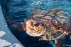 DSC_7805 (9ings) Tags: europa fuerteventura genre herkunft schildkröte