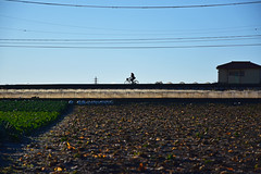 20170116_014_2 (まさちゃん) Tags: 通勤 silhouette シルエット 長閑