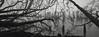 Along the Waterfront, Astoria, Oregon (austin granger) Tags: astoria oregon columbiariver waterfront trees pilings fallen fog complexity dendrites correspondence mind evidence film xpan