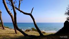A Paradise in Salento II (Frank Abbate) Tags: beach spiaggia alimini otranto mare sea lecce salento sabbia alberi sand trees canon eos 80d adriatico adriatic mediterran mediterraneo puglia apulia italy italia italien
