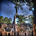 HDR rendition of the most photographed Tree in Ankor Wat