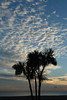 20131009_0018 (EJ Bergin) Tags: sunset sea sky beach silhouette clouds sussex worthing palmtrees tz10 lumixtz10