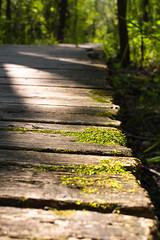 _DSC2220-Edit.jpg (c.macp) Tags: sun green moss nikon hiking path walk scenic explore boardwalk lush bog londonontario sifton d7100