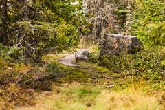 Rock and a Hard Place (Alothan) Tags: trees ontario canada nature rock rural ground vegetation shuniah