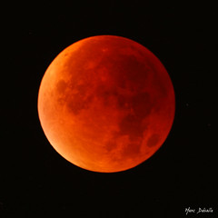 Red Moon... (Marc Delsalle) Tags: nature lune eclipse blood fullmoon lunar bloodmoon redmoon clipselunaire superlune