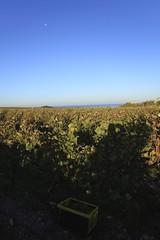 Vendanges 2015 au Vignoble des Hauts de Talmont 12