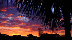 Sunrise Bradenton (Jim Mullhaupt) Tags: pictures camera morning pink blue red wallpaper sky orange sun color tree weather silhouette yellow clouds sunrise landscape photography dawn photo nikon flickr florida snapshot picture palm exotic p900 tropical coolpix bradenton sunup cloudsstormssunsetssunrises nikoncoolpixp900 coolpixp900 nikonp900 jimmullhaupt