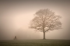 Cycling......... (Digital Diary........) Tags: park uk trees mist fog mystery canon cycling atmosphere sthelens 6d merseyside sherdleypark