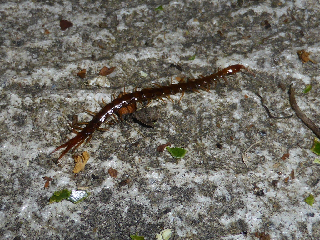 The World's Best Photos of arthropod and centipede ...