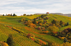Rolling Hills in Autumn - Landscape in Stuttgart, Germany (Batikart) Tags: autumn trees red sky orange plants house mountain mountains tree green fall nature colors leaves yellow forest canon germany landscape geotagged deutschland leaf vines colorful europa europe day seasons quilt wine stuttgart patterns hill herbst natur stripe felder himmel tranquility row powershot line foliage growth vineyards grapes fields greenery patchwork curve multicolored ursula landschaft wald grape baum variation indiansummer wein weinberg sander g11 hgel badenwrttemberg 2015 herbstfrbung 100faves 200faves 300faves 400faves batikart
