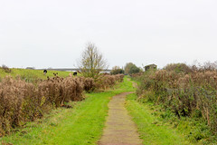 Welney main path