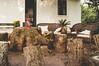 151017_Farm to table SP_027 (Luiz Henrique Rocha Rodrigues) Tags: casa expediçãofarmtotablesp fazenda lamparina luizhenriquefotografia outputphoto sofá sofádevime arquitetura ©luizhenriquerocharodrigues tuiuti flora casadecampo fotoexterna verde sp desenhandoaluz estadodesãopaulo móvel br sãopaulo brasil morungabasp morungaba vegetal bra brazil decoración decoração decoration flower flor evento alimentacaoorganica fazendasantaadelaideorganicos