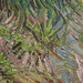 Vincent Van Gough - Iris - national gallery of canada 080