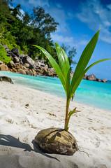DSC_1258 2 (NICOLAS POUSSIN PHOTOGRAPHIE) Tags: soleil eau sable bleu coco fin vague plage rocher palmier bois seychelle turquoide