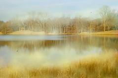 Casually (floralgal) Tags: read edith sanctuary naturepreserve ryenewyork autumninnewyork newyorklandscape westchestercountynewyork edithreadsanctuary ryenewyorklandscape
