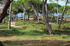 La fort de Meco (hans pohl) Tags: trees portugal nature landscapes sunny arbres paysages sesimbra ensoleill