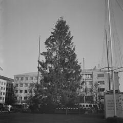 A big christmastree (rotabaga) Tags: göteborg lomo lomography sweden gothenburg christmastree sverige jul tmax400 lubitel166 julgran svartvitt r09 fomadon