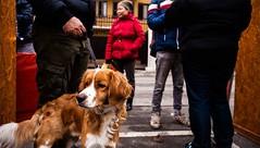 la bellezza del cane (andreabotti567) Tags: dog 28mm canon5d brescia lombardia bagnolomella autochinon