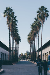 Palms (ThomasMartinPhotography) Tags: california autumn trees sky fall beautiful palms palm stanford