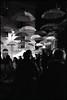Ombrelli (Franco & Lia) Tags: blackandwhite film analog noiretblanc epson hp5 rodinal umbrellas ilford biancoenero argentique pellicola analogico parapluies v500 ombrelli nikonl35af2 aph09
