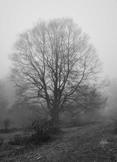 El árbol fantasma