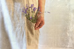 Dreams (raewillow) Tags: lavender summer harvest