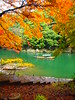 Autumn Leaves Viewing (brisa estelar) Tags: autumn leaves river boat foliage green yellow orange downstairs kyoto japan traditional travel unseenasia