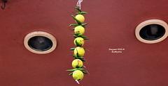 No hitching (sajan-164) Tags: lemon green chili nohitching kolkata west bengal india sajan164 outdoor