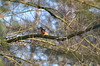 31.12.16. Eisvogel. (dreistrahler) Tags: 311216zollibasel bölchen natur gämsen sonnenunt laneerlen luchs eap swiss zrh air14 airhabsheim