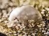 Leider nur zur Hälfte..... (Vintage lens lover) Tags: seifenblase bubbles natur bokeh schärfentiefe