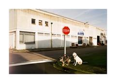 Somewhere With The Dogs (Punkroyaltiger) Tags: film analog contax contaxg2 fujifilm superia superia200